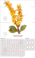 Форма для вырубки Flower - Forsythia, серия Thinlits Die, Sizzix